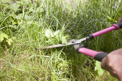 Cutting weeds Royalty Free Stock Photo