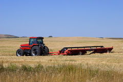 Cutting Wheat. A red tractor and mower cuts golden wheat and lays it down in rows under a clear blue Alberta sky Royalty Free Stock Photo