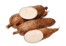 Cutting and whole manioc Stock Images