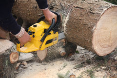 Cutting wood with chain saw. One man cutting pine wood with chain saw Royalty Free Stock Photography