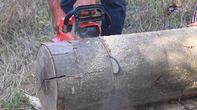 Cutting through wood with chainsaw. Close up stock video
