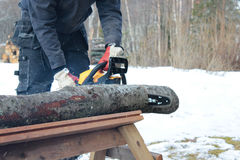Cutting wood with chainsaw Stock Photo