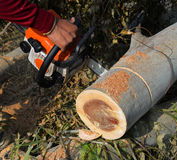 Cutting wood saw Royalty Free Stock Images