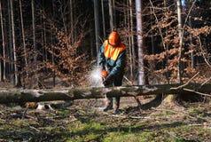 cuttingen pieces treeskogshuggare Royaltyfri Foto