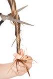 cuttinghårkvinna Royaltyfri Fotografi