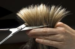 Cuttinghair Stock Afbeeldingen
