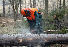 cuttinglumberjacktree Royaltyfri Bild