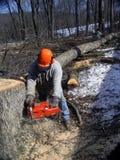 cuttinglumberjacktrees Arkivfoto