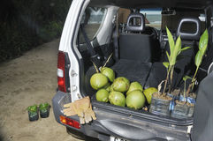 Cuttings and coconuts Stock Photography