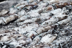 Cuttle fish at the fish market Royalty Free Stock Photos
