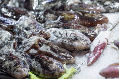 Cuttle fish at the fish market Stock Photo