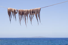 Cuttle-fish hanging to dry Stock Photos