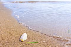 Cuttlebone is on the sandy beach. Cuttlebone is washed up by the sea on sandy beach stock photos