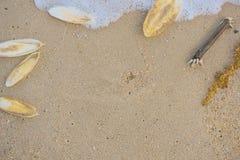 Cuttlebone und Rankenfußkrebs auf dem Strand Lizenzfreie Stockfotografie