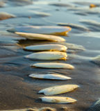 Cuttlebones on the shore Royalty Free Stock Photography