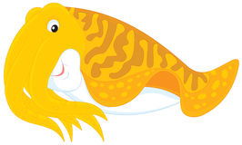 Cuttlefish. Vector clip-art illustration of a swimming cuttle fish Royalty Free Stock Photos
