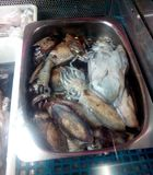 cuttlefish Zdjęcie Royalty Free