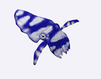 Cuttlefish. A blue and white colored cuttlefish Stock Photos