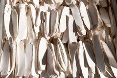 Cuttlefish Bone Stock Photography