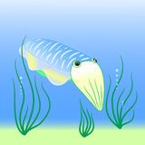 Cuttlefish vector. Cuttlefish  illustration  with  blue background Royalty Free Stock Photos