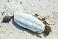 Cuttlefish kość Fotografia Royalty Free
