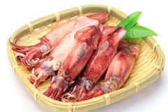 Cuttlefish które gotowałem się zdjęcie stock