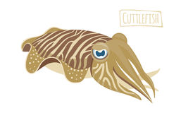 Cuttlefish mollusk, cartoon style Stock Photo