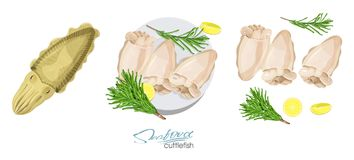 Cuttlefish seafood isolated sketch. Illustration of a dish of cuttlefish with lemon and rosemary on a plate. Cuttlefish. Lemon, rosemary separately on a white Stock Image