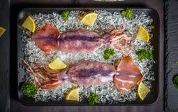 cuttlefish świezi Obrazy Stock