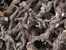 Cutup Old Vine Firewood Stock Photos