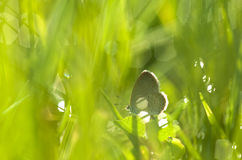Cuty butterfly. Betterfly on the light green meadows Stock Photo