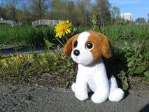 Plush dog outdoors royalty free stock photo