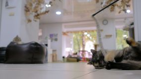 Cutykat het spelen met stuk speelgoed stock footage