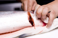 Cuuting de los salmones principales Imagenes de archivo
