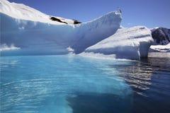 南极洲海湾cuverville冰山 图库摄影