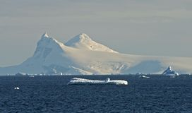 Cuverville Island Antarctica 5 Royalty Free Stock Image