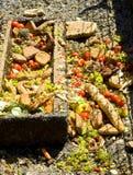 Cuvette alimentante de faune Photo libre de droits