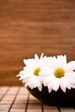 Cuvette avec des fleurs photos libres de droits