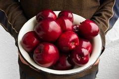Cuvette avec les pommes rouges dans des mains masculines photos libres de droits