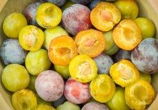 Cuvette complètement de différents genres de prunes ; coloré Photos stock