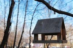 Cuvette d'alimentation pour des oiseaux sur un arbre Image libre de droits