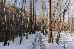 Cuvette de chemin l'hiver forrest Photographie stock libre de droits