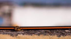 Cuvette de croisement d'escargot un petit chemin sur des banlieues Photographie stock