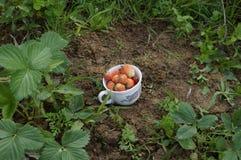 Cuvette de fraises Photographie stock
