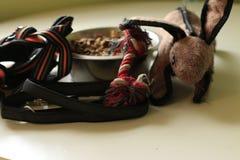 Cuvette de jouets, de laisse, de harnais et de nourriture de chien Concept de prendre soin d'un chien ou d'obtenir un nouveau chi image stock