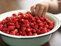 Cuvette de Metall avec les fraisiers communs Images stock