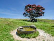 Cuvette de moutons et arbre de pohutukawa Image libre de droits
