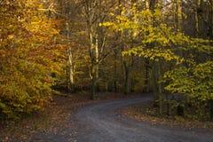 Cuvette de route le papier peint de forêt d'automne Image libre de droits
