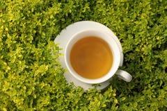 Cuvette de thé de fines herbes en herbes Photos stock