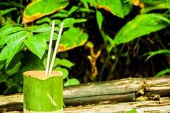 Cuvette en bambou photographie stock libre de droits